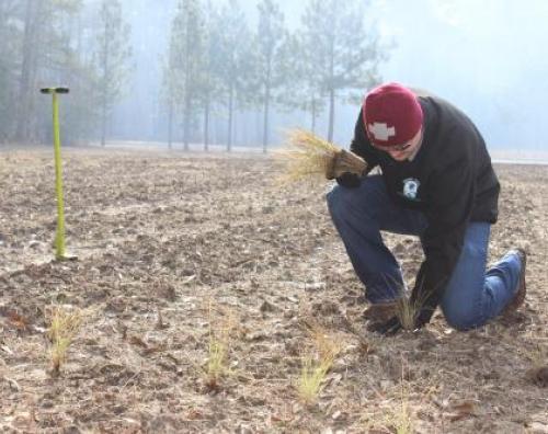 planting bald cypress