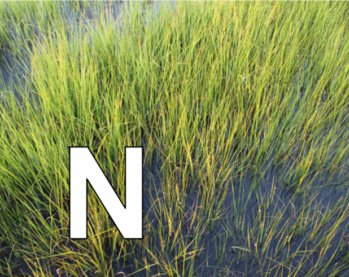 N is for native plants