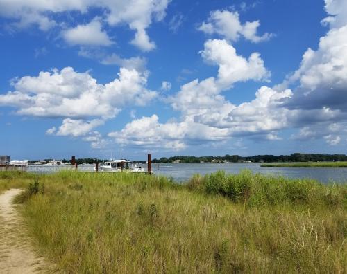 virginia salt marsh
