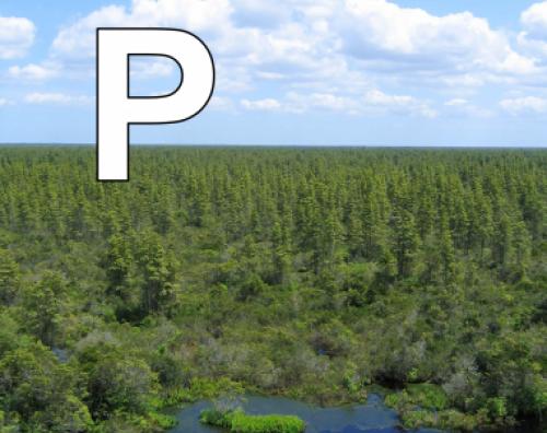 P is for Pocosins