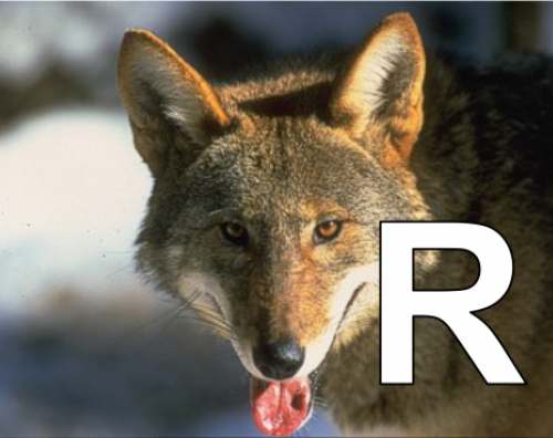 R is for Red Wolf