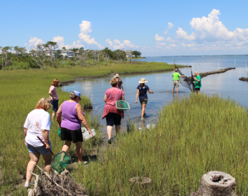 teachers explore the salt marsh