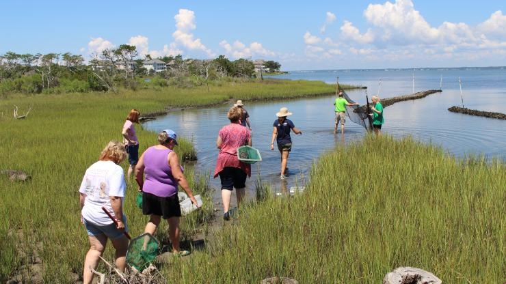 teachers in the marsh