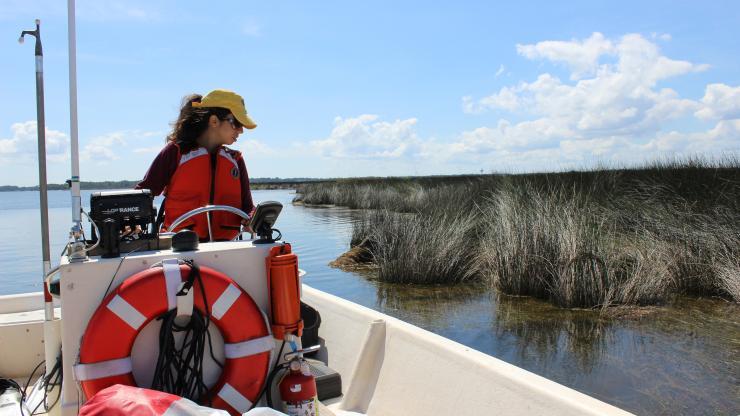submerged aquatic vegetation monitoring