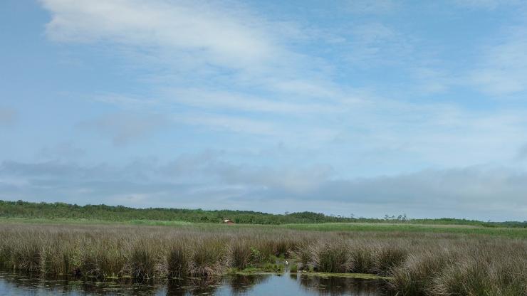 flyaway tract marsh