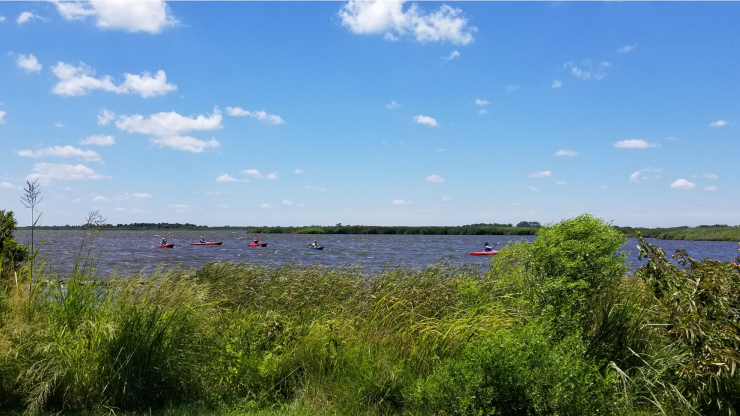 people kayaking in back bay