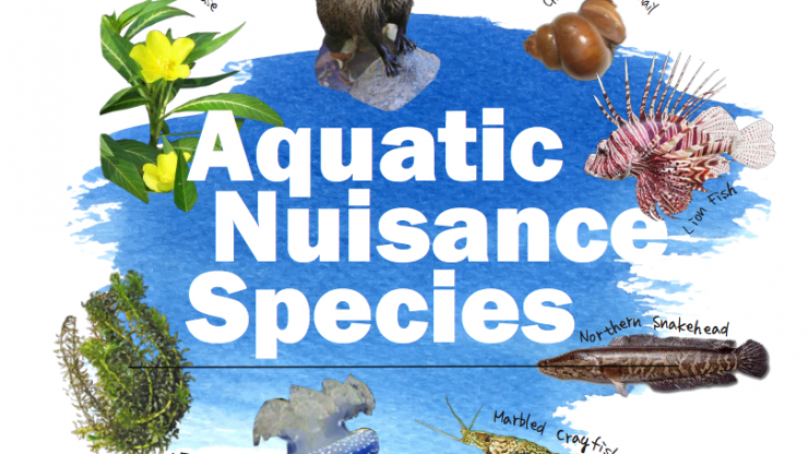aquatic nuisance species plan