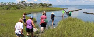 teachers exploring the marsh