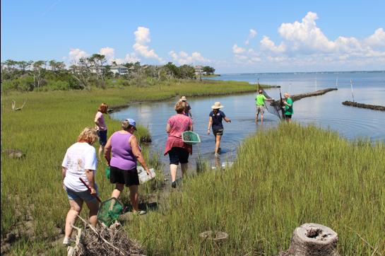 teachers explore the salt marsh