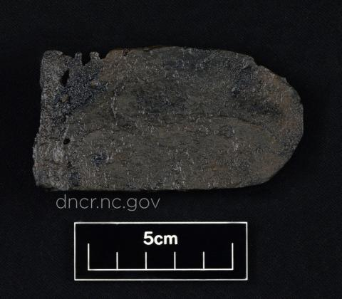 A fragment of a leather shoe insole from QAR, identified through PMF as cattle skin.