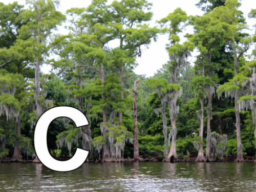 C is for Cypress