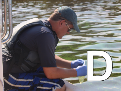 D is for dissolved oxygen