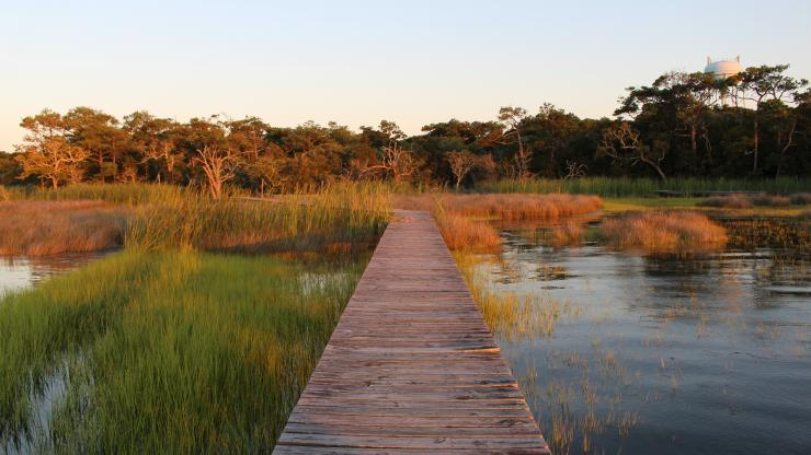 boardwalk in the marsh