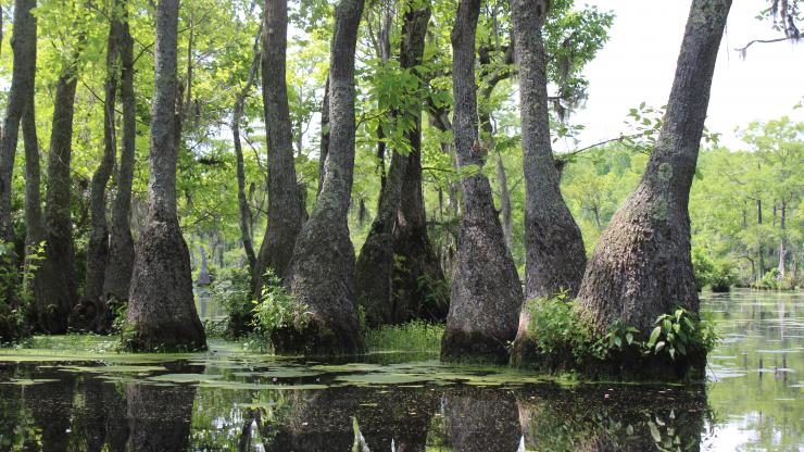 trees growing in the water