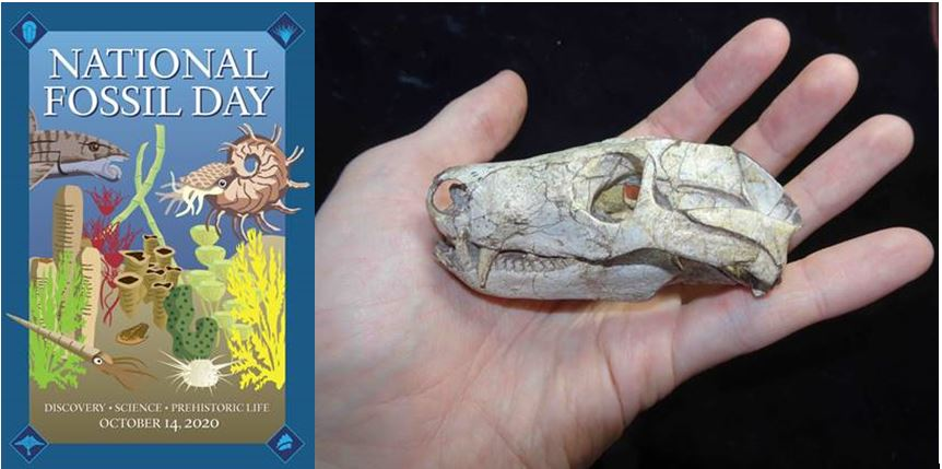photo of skull and poster for national fossil day