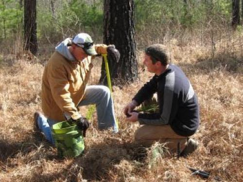 2 men planting a tree in the woods during fall
