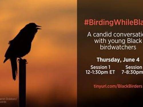 photo of a bird notifying people of the Birding While Black Conversation on June 4