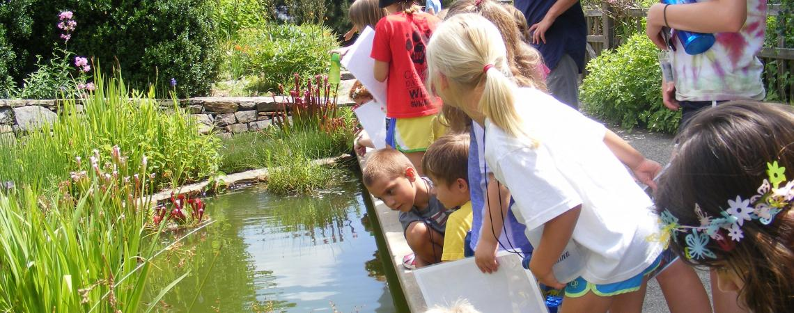 kids doing a pond study at the nc arboretum