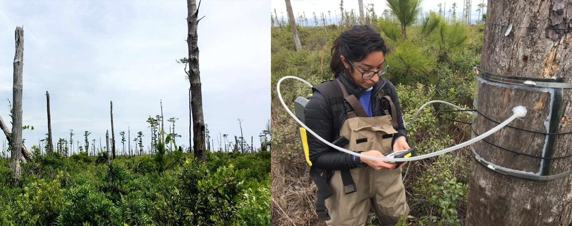 photo of Dr. Martinez studying a forest affected by sea level rise