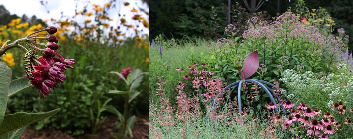 photo of pollinator garden in Chatham County