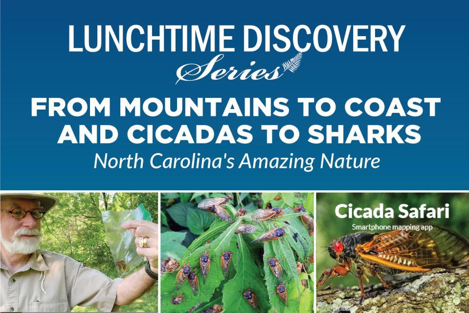 Graphic Advertising Cicada Talk on May 19