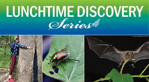 photo of our speaker hugging a tree, a beetle on a plant and a bat eating a plant