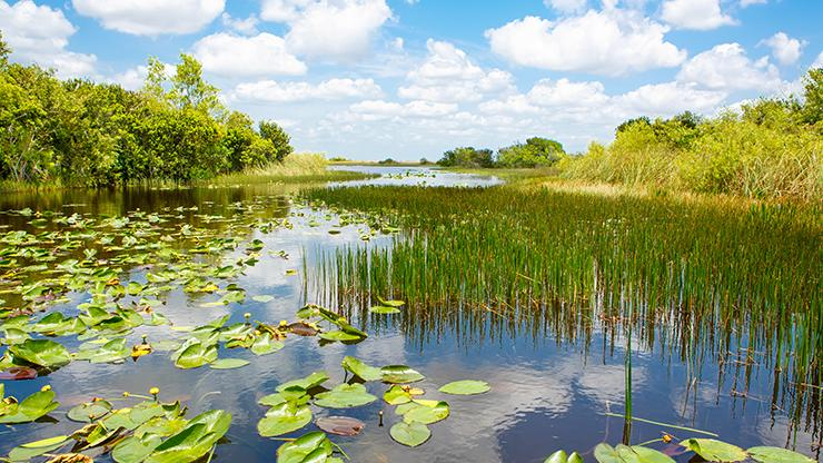 wetland area with grasses and water lilies