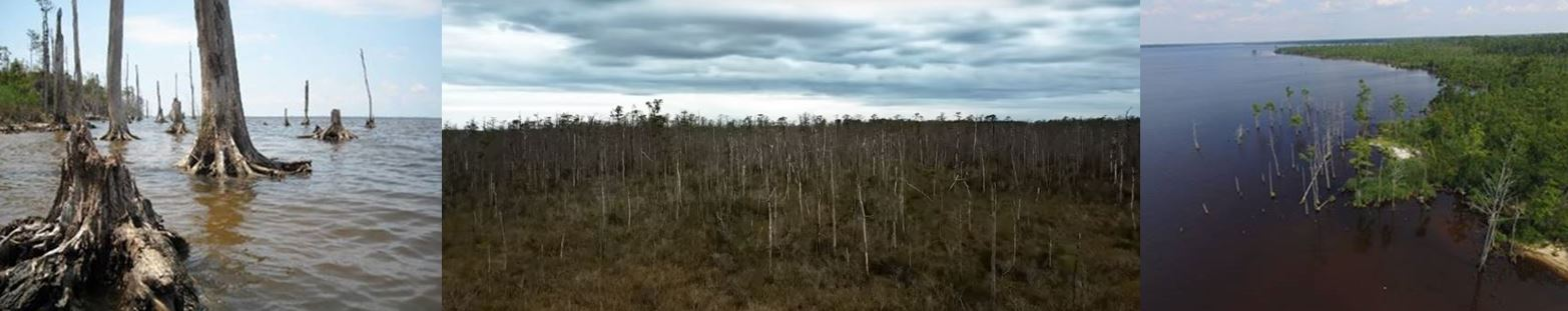 dead trees and ghost forests