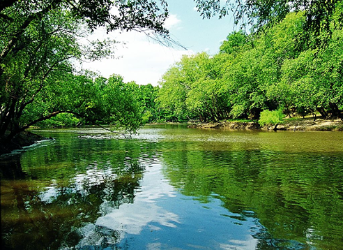 calm river with green trees on river banks