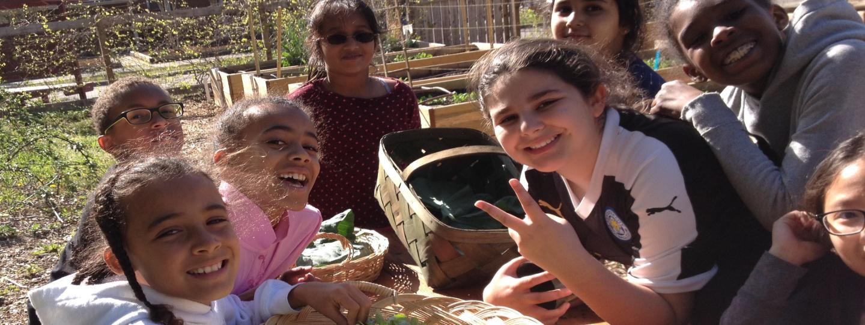 children harvesting greens