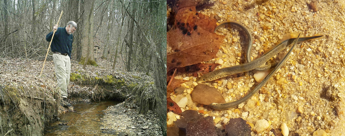 jerry reynolds in forest and least brook lampreys in stream