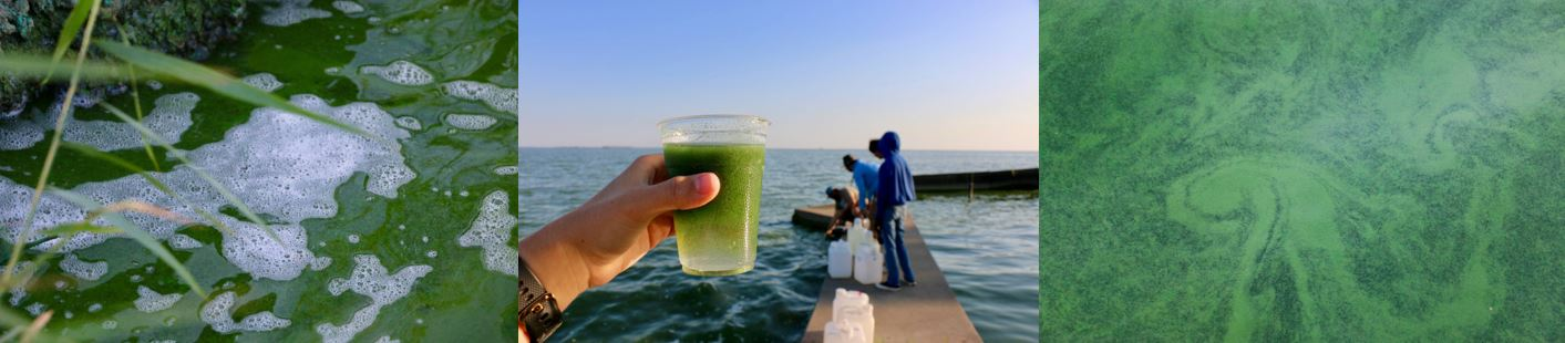 algae and researchers, algae in a glass