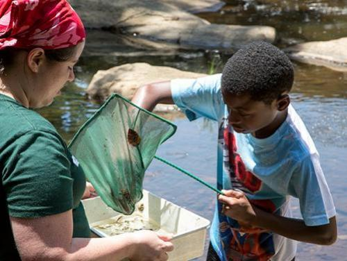 Educator and child using a dip net in stream