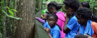 photo of kids looking over bridge with wonder at cool springs