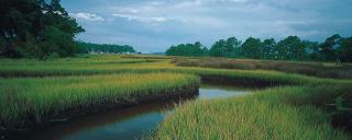 Ward Creek winds through marshland
