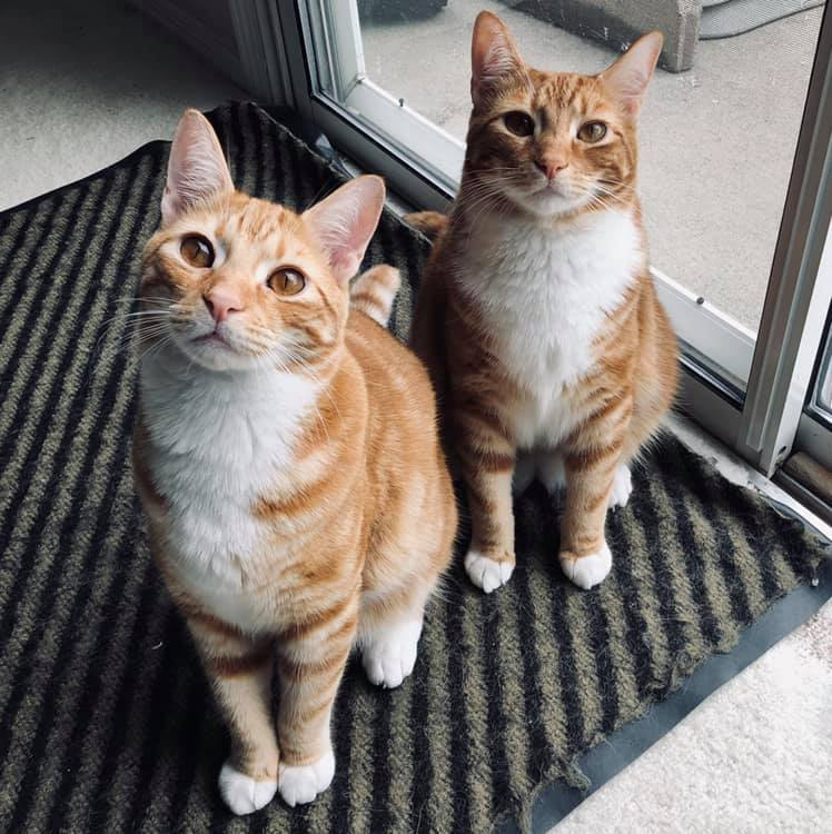 Cats Oliver and Oscar