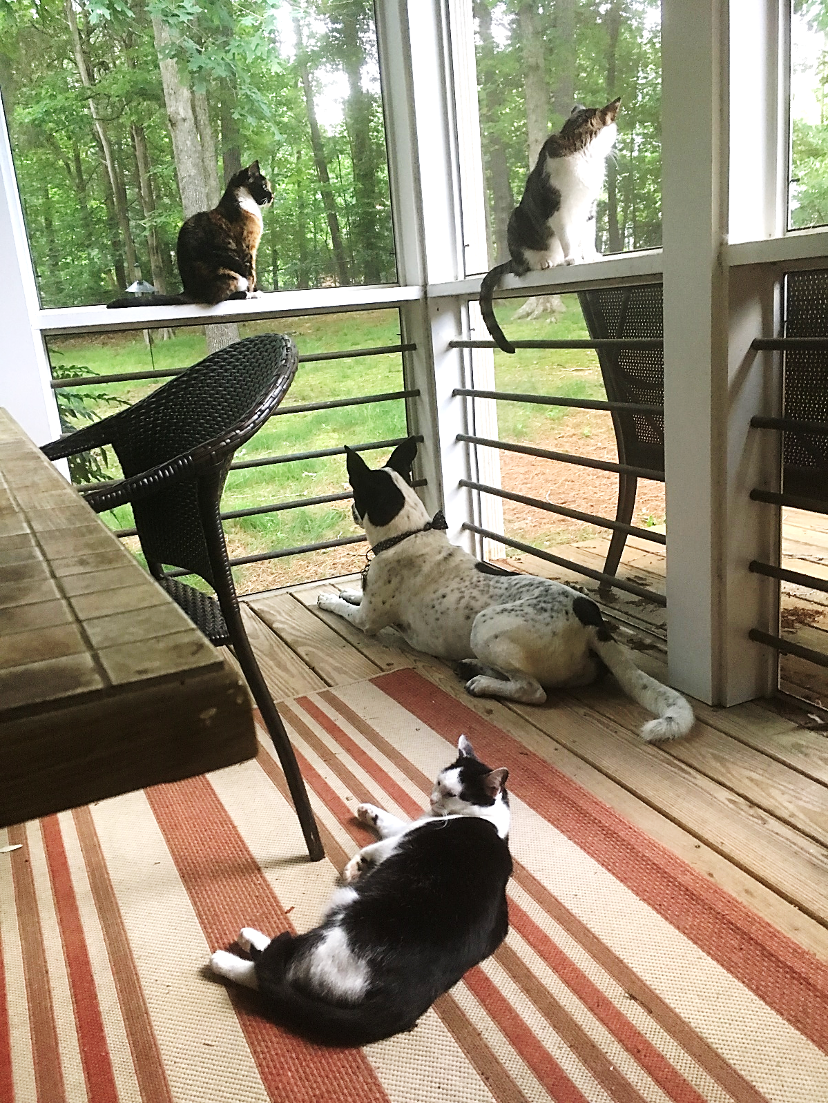 My four cats, Lyanna, Mulder, Scully, and Ozzie