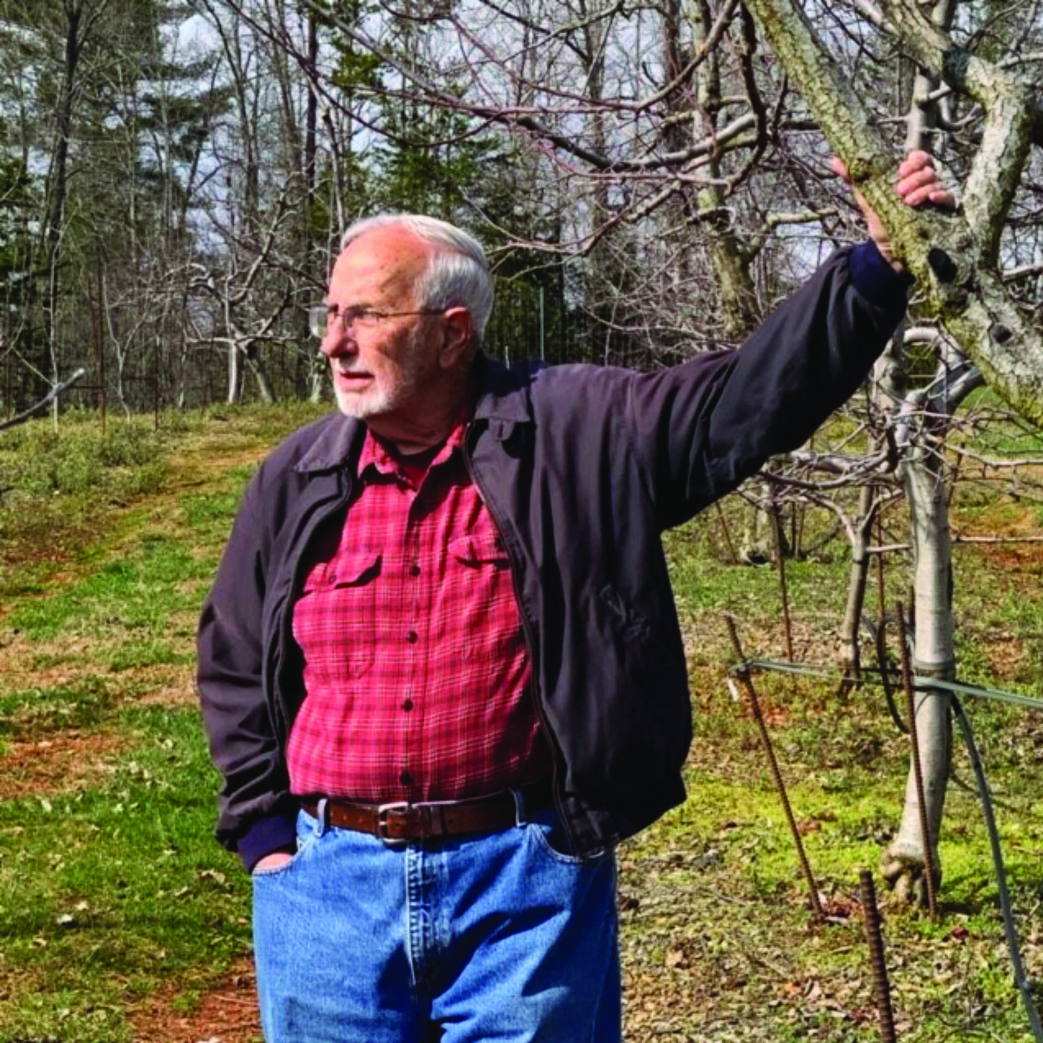 Lee Calhoun, with white hair and beard, standing by an apple tree and grasping a limb