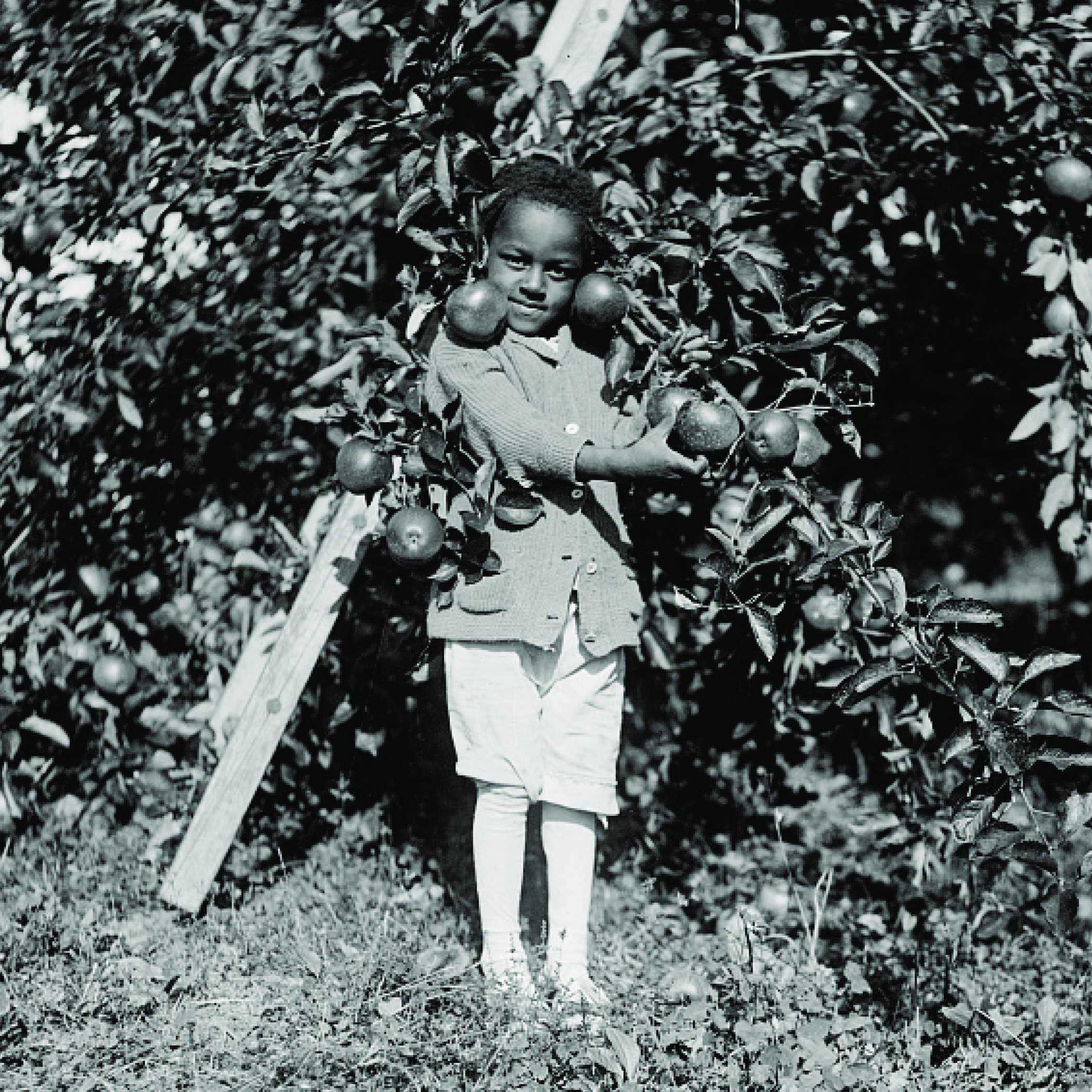 vintage photograph of a young boy standing among apple branches holding an apple in his hand