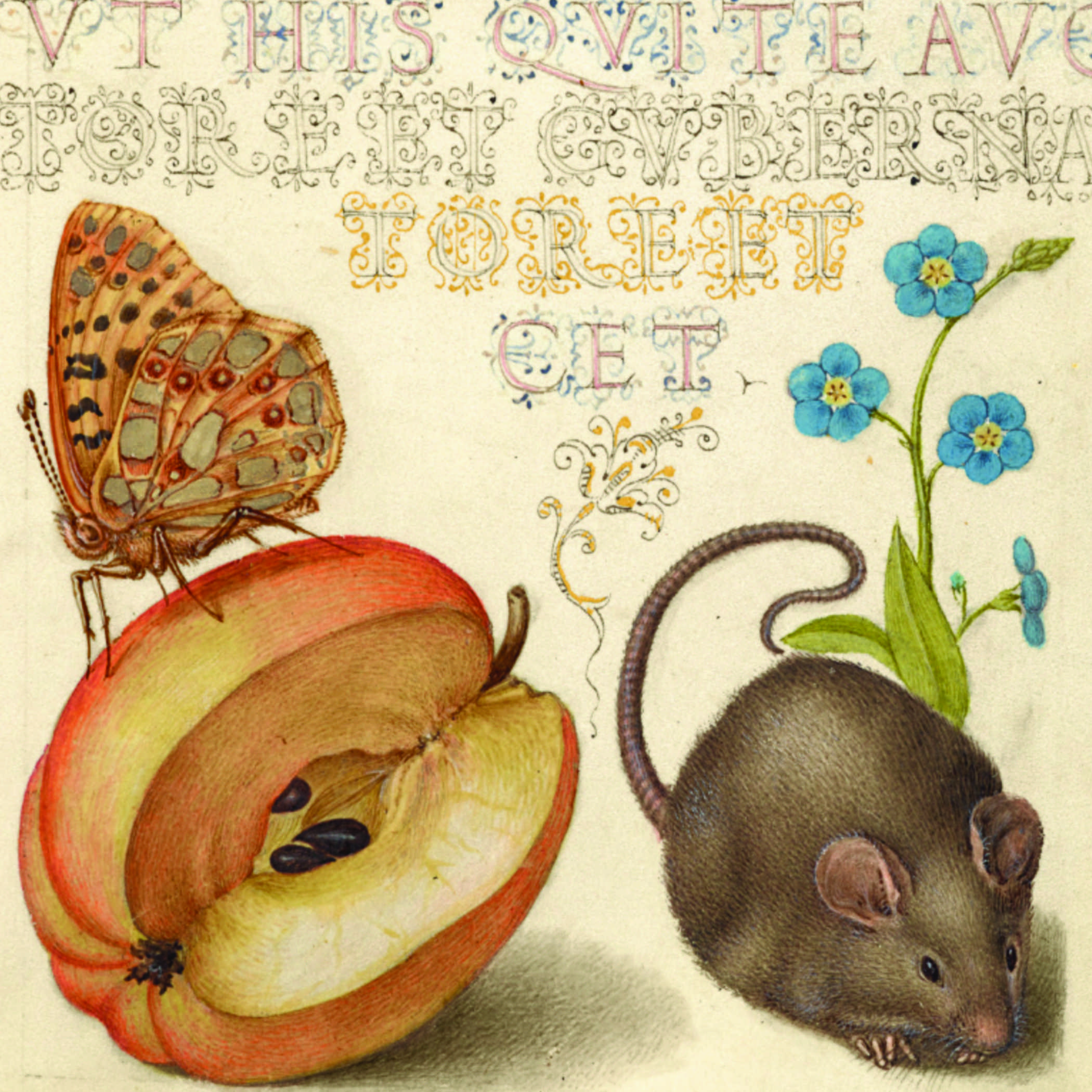 medieval illuminated text with pictures of a mouse, an apple, and a moth sitting on the apple