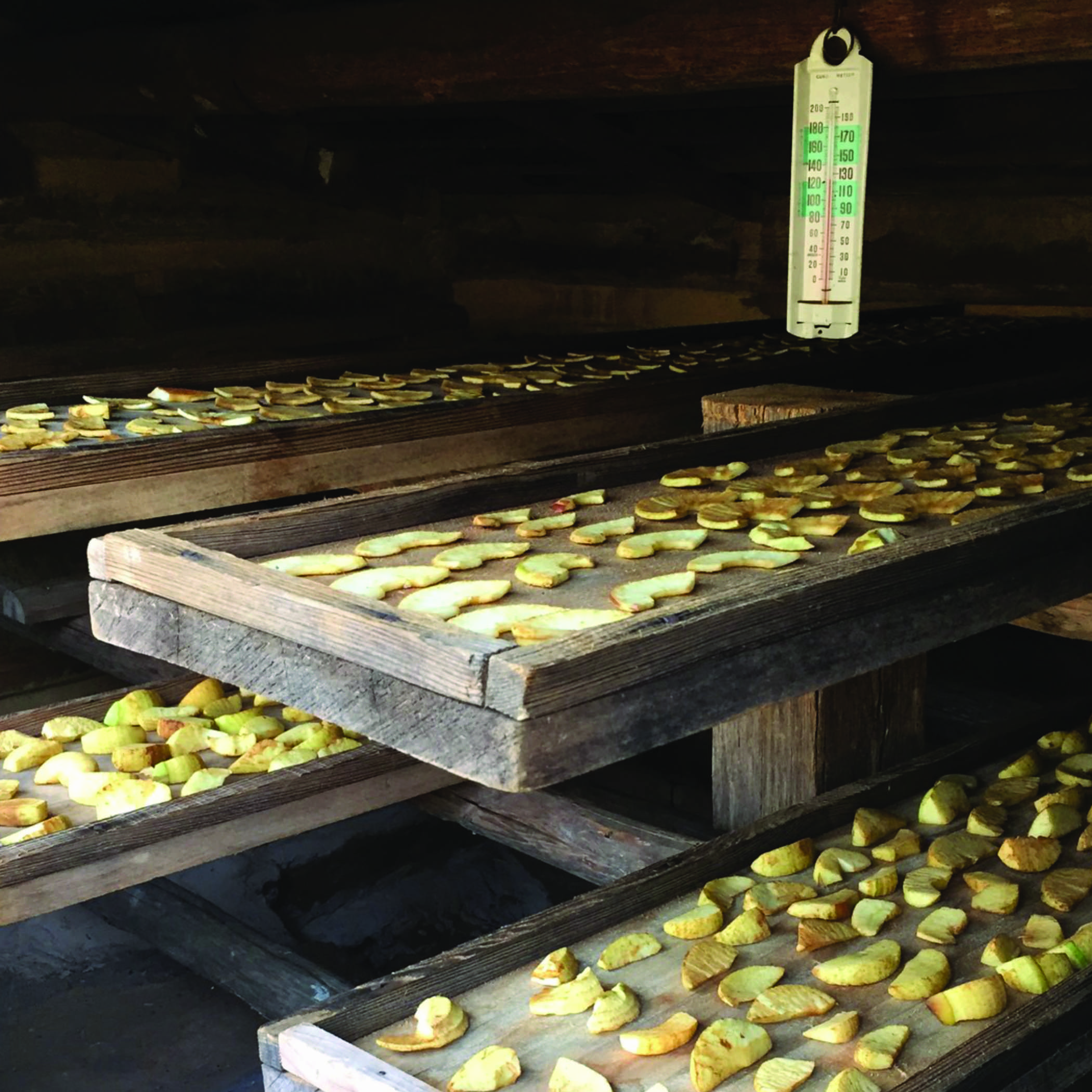 sliced apples on trays in the drying shed