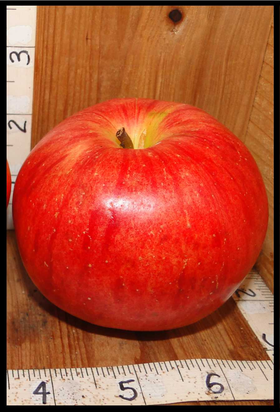 red apple with slight yellow streaks and darker red splotches