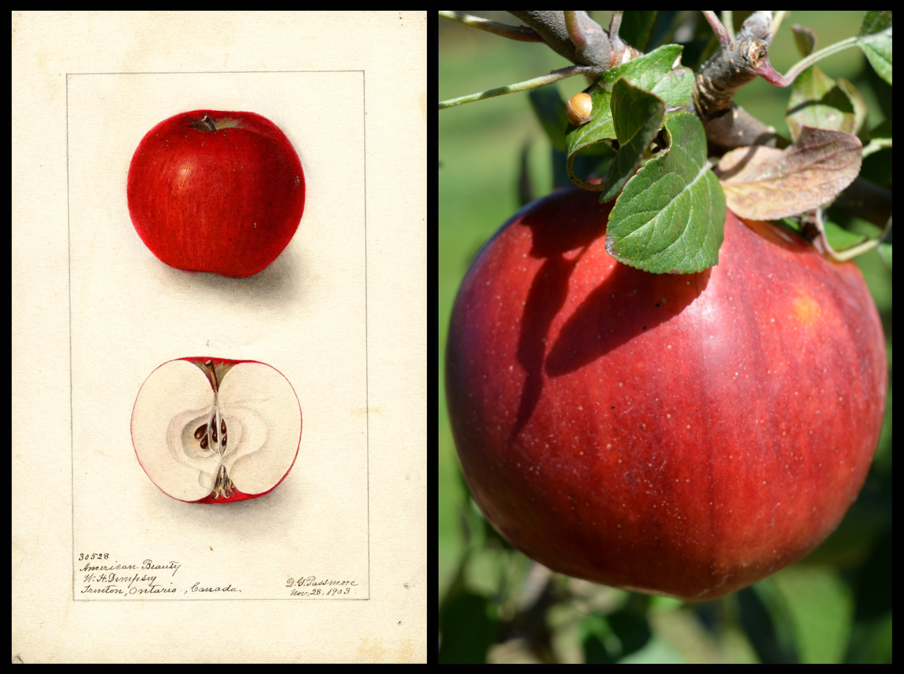 red apple with darker red striping and slight yellow splotches