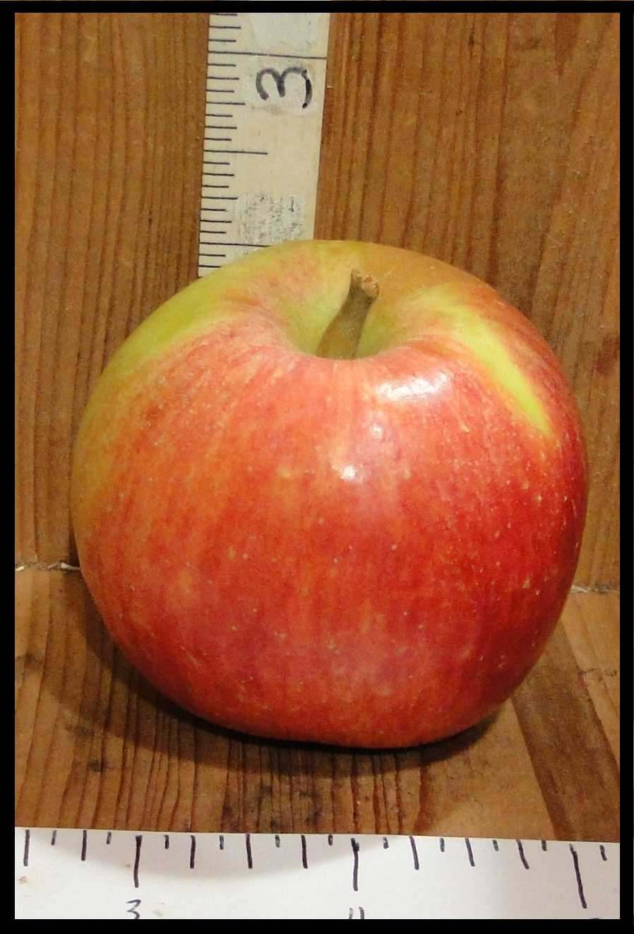 yellow apple with red blush and streaking