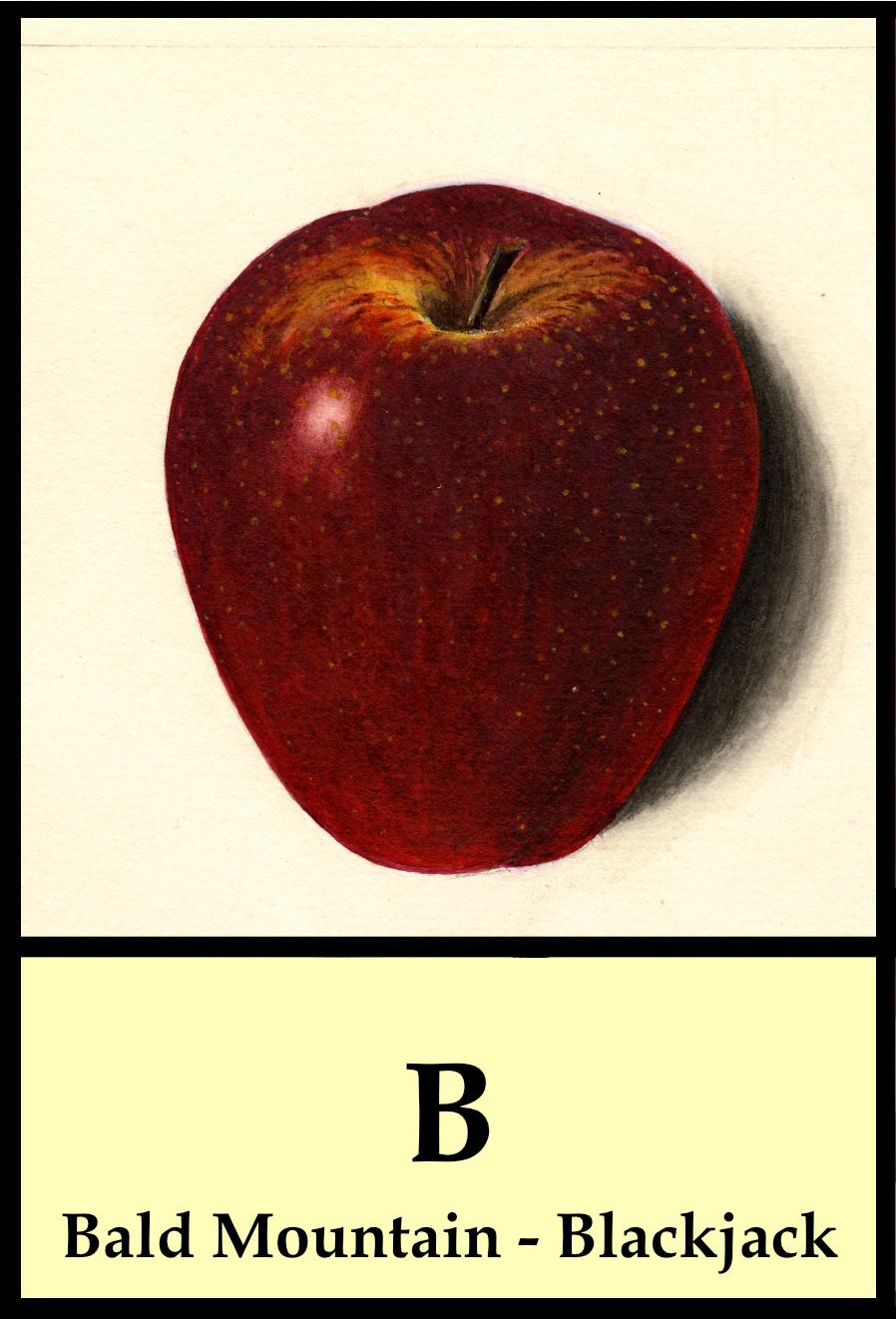 B apple - Bald Mountain to Blackjack