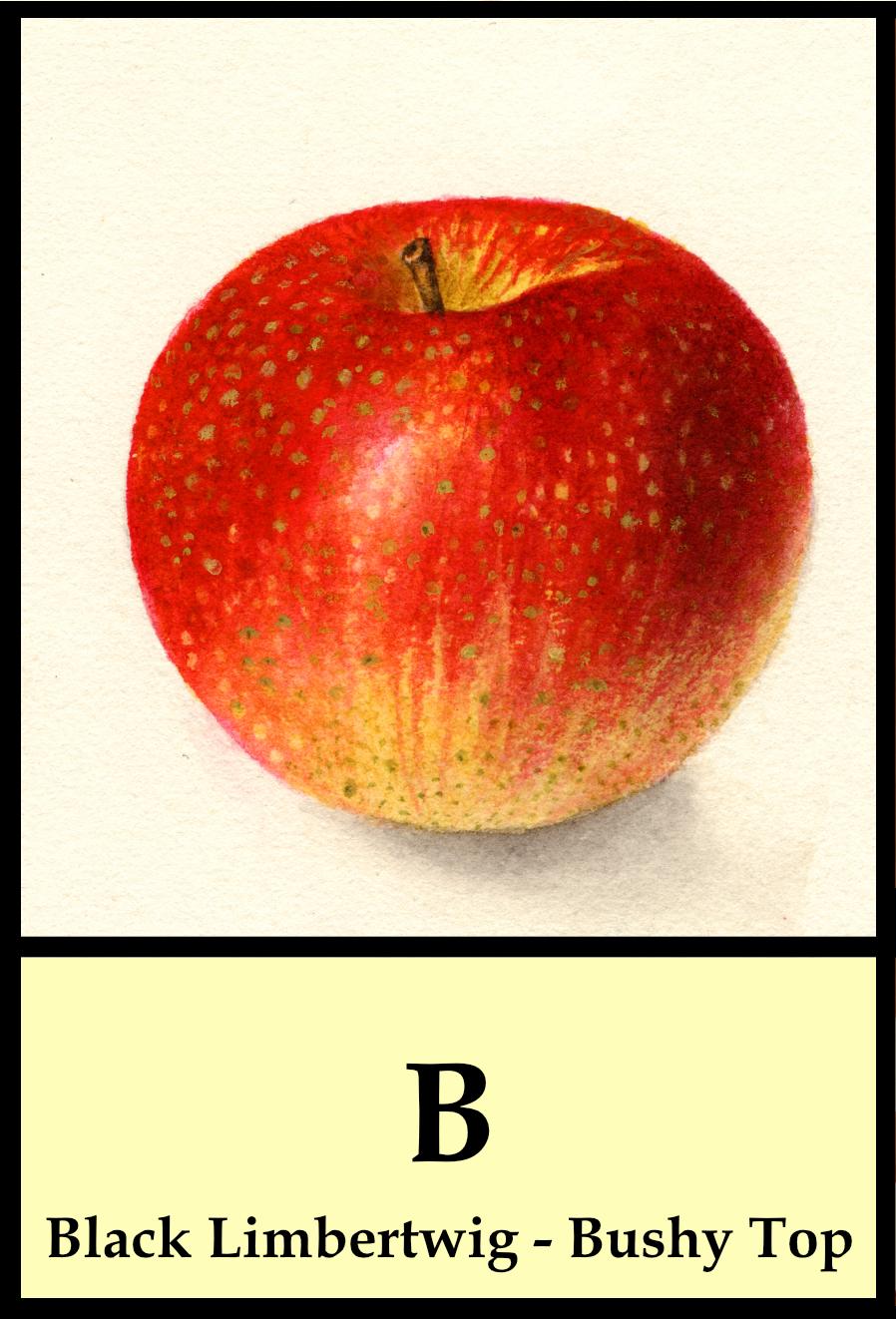 B apples - Black Limbertwig to Bushy Top
