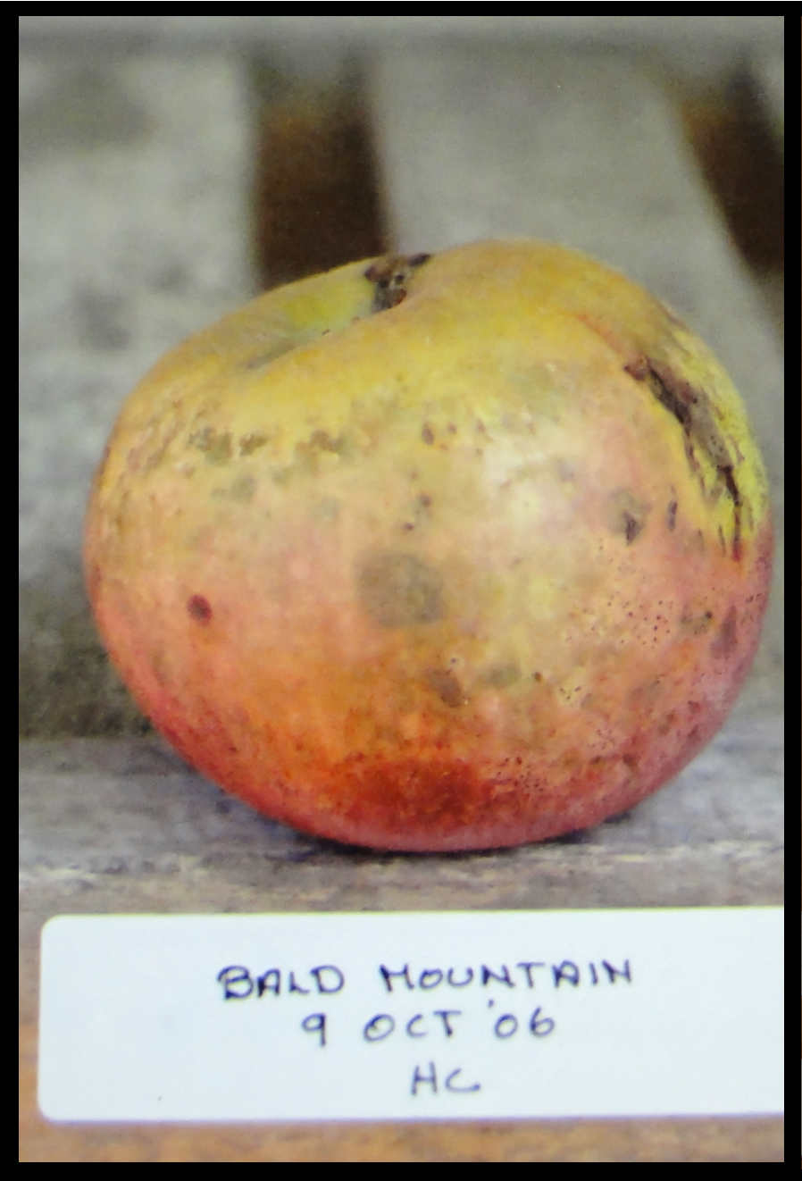 an apple that is yellowish tan on the top half and pinkish red on the bottom half