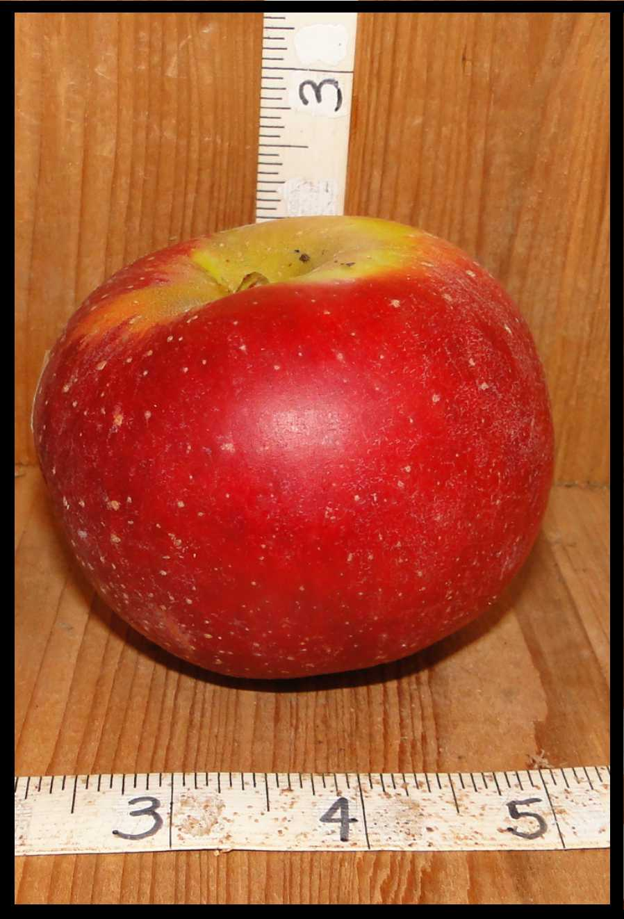 red apple with yellow on the stem end and small white spots