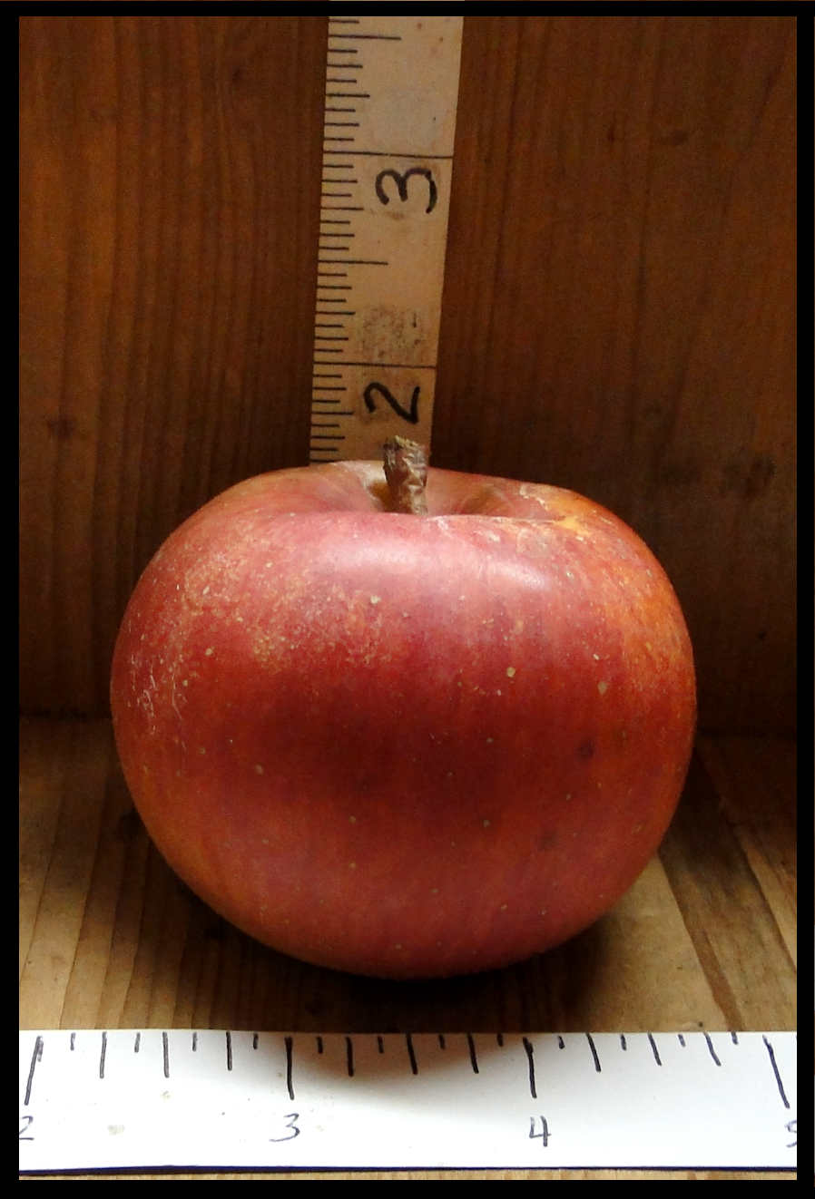 red apple with pinkish yellow mottling