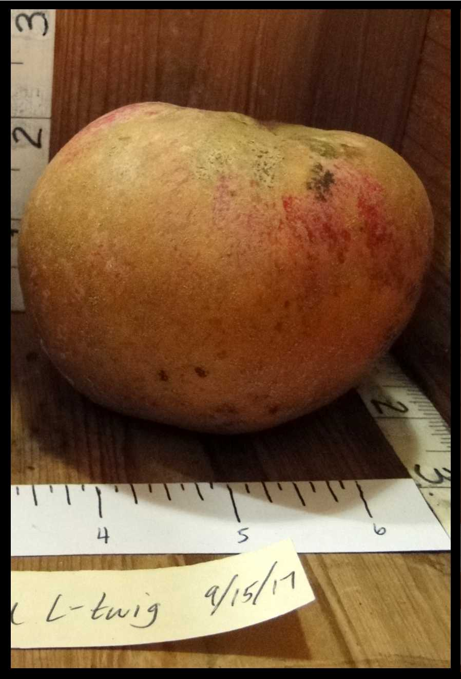 tan apple with slight red blush, mottling, and slight striping